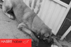 İki köpeğe işkence..  Demirle döverek öldürdüğünü itiraf etti
